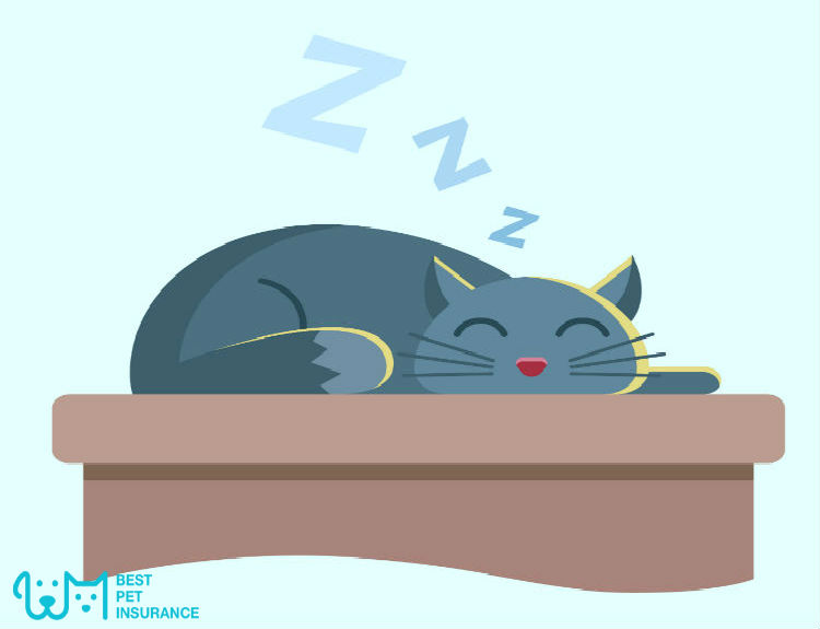 Cat Snore – Should you be worried?