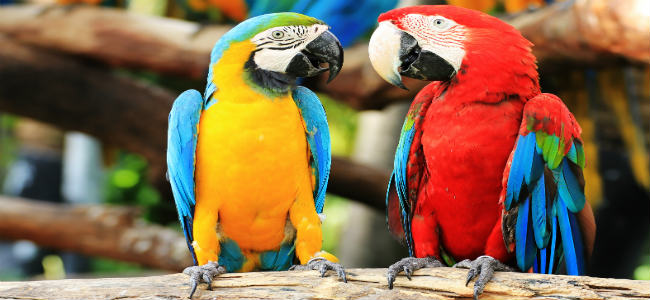 Parrot Care - a guide to caring for your parrot in 2020