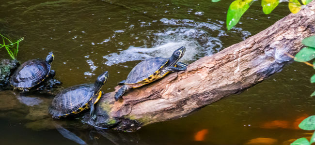 How to Take Care of Turtles?