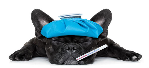 9 Common Health Issues in Dogs