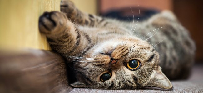 10 Interesting Myths About Cats