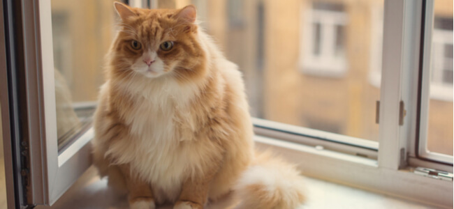 Cat Obesity - How To Care For Fat Cats