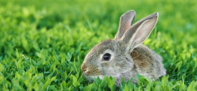 Rabbit sits in green gras