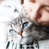 Women kisses a grey cat