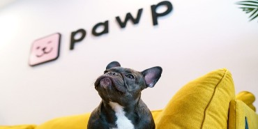 Dog looks up to pawp logo